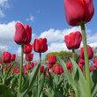 万博記念公園で花見