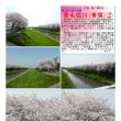 埼玉-654 青毛堀川(青葉)②