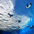 秋の遠足・サンシャイン水族館