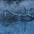 蛇ヶ池もメジャーに
