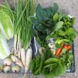 今日の収穫、野菜13種。
