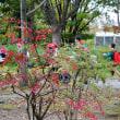 紅葉に赤い帽子 (公園昼下がり)