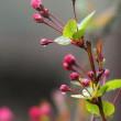 春の雨~養花雨と催花雨