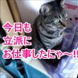 猫の得意技・チャイルドロックを解除