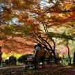 日比谷公園の紅葉・・4