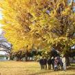 【深谷】大きな○○の木の下で!