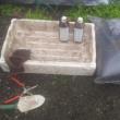 粉炭・木酢液畝の検証実験開始