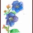 謙虚な輝きでシコン野牡丹咲いていますよ