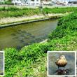 石津川から百済川沿い
