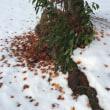 大相撲と落ち葉