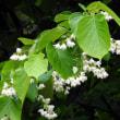 白い花の木!?