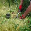 自然菜園スクール ベーシックプラスコース5月(自然観察と野良仕事:夏野菜の定植)