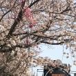 JR松任駅のSLと桜 2018