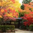 禅寺の紅葉 4
