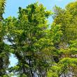 『季節の色』 竹林