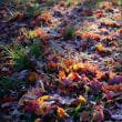 色を失う前に、朝霜と紅葉