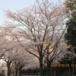 桜並木を一周