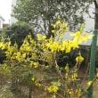 庭にも春が。