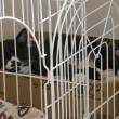 猫部屋の様子 2018 0315