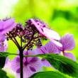 カラフル❗️遊歩道で楽しませてくれる花たち  目の保養です❣️  #花の文化園 No. 2