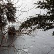 おしどりの池が凍結