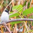 絵鞆半島で出会った野鳥