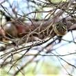 金刀比羅さんの野鳥