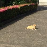寺猫…ではありません