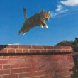 岩合さんの写真展「世界ネコ歩き」