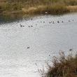 勝山にもある「美しい水鳥コロニー」。