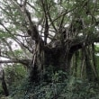 加計呂麻島の動物
