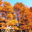晩秋の神代植物園、楓の紅葉には早かったが・・