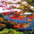 上野公園 2017紅葉