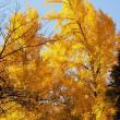 秋を求めて・・・奥多摩へ