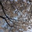 桜やら春の遠足やら