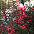 身近で紅葉を楽しむ 2