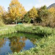 岬原地内のカワニナの住む池