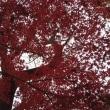 今年の紅葉は・・・④/大雪