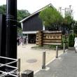 生田緑地「ショウブ」が咲き始めた!!