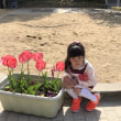 10日 幼稚園 入園式