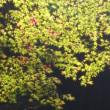 秋色の奈良公園をお楽しみください。