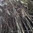 竹薮を切り開く