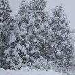 青森市は、大雪になりました。
