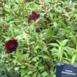 '17 ウェークハーストプレイス Wakehurst Place;<ヘンリー・プライス・ウォールドガーデン>の植栽