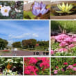秋の植物公園