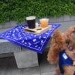 トイコと一緒にビール祭りへ