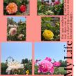 北海道も花の季節