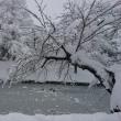 2回目の大雪警報