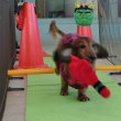 パピー達もすくすく成長中~  犬のしつけ教室@アロハドギー