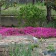 広いお庭でバーベキュー